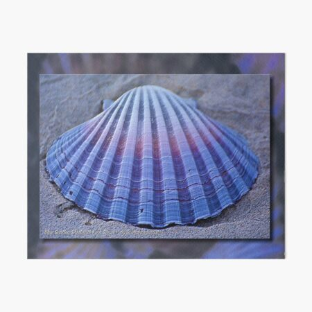 GALERIEBORD ~ MICRO TALE ~ Blue Scallop Shell With Pink Stripe by tasmanianartist Art Board Print