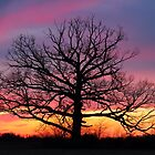 Giant at Sundown by Kenneth Keifer