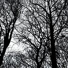 Bare Trees by Maria Meester