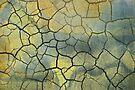 Sunshine Crackle by Barbara Ingersoll