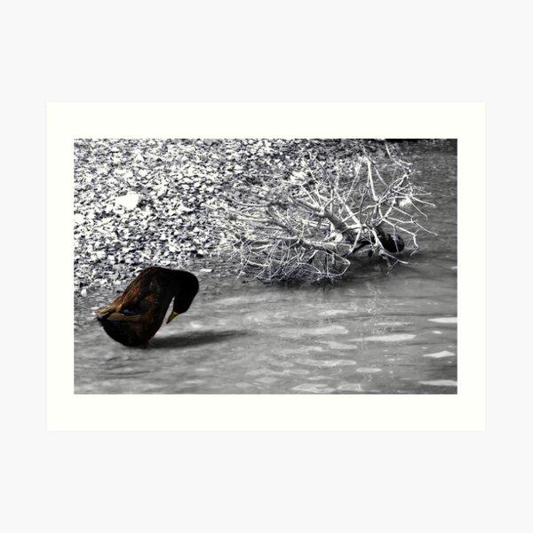Duck SC Art Print