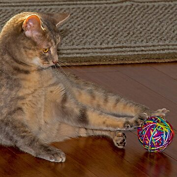 Meeka playing with a Ball of Yarn by imagetj