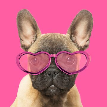 Cute French Bulldog puppy wearing pink heart shaped glasses by ArdeaOnline