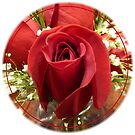 Red Rose with Baby Breath by Elaine Bawden