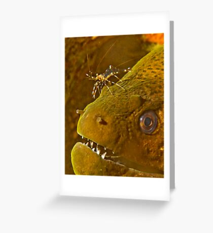 Cleaner Shrimp on Moray Greeting Card