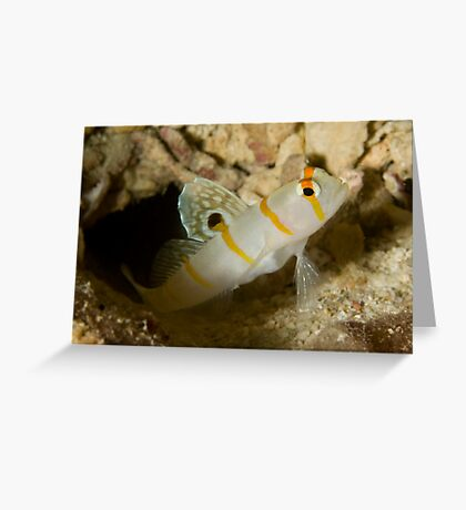 Sailfin Blemey Greeting Card