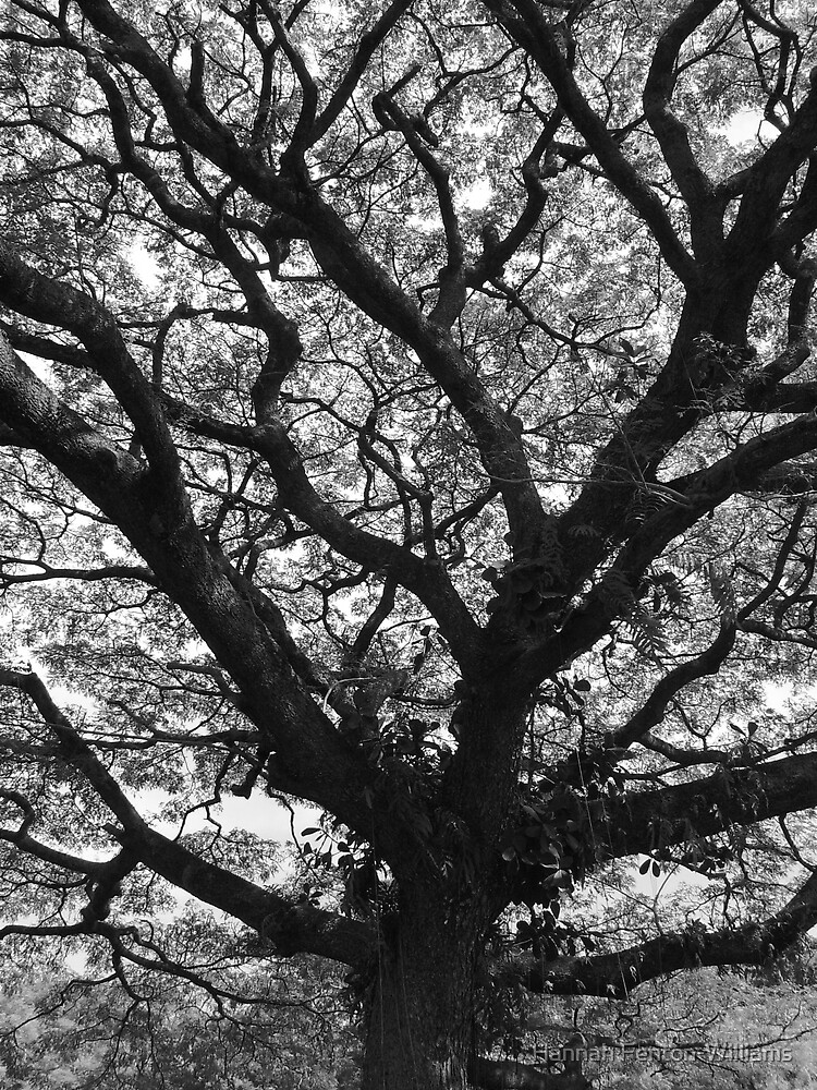 Branches of life. by Hannah Fenton williams