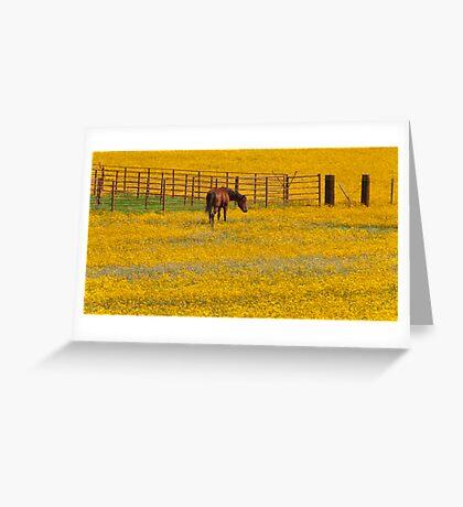 Field of Sunshine Greeting Card