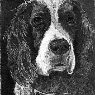 DAISY/Spaniel by FaithfulFaces