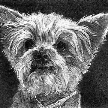 CLOONEY/Yorkshire Terrier by FaithfulFaces