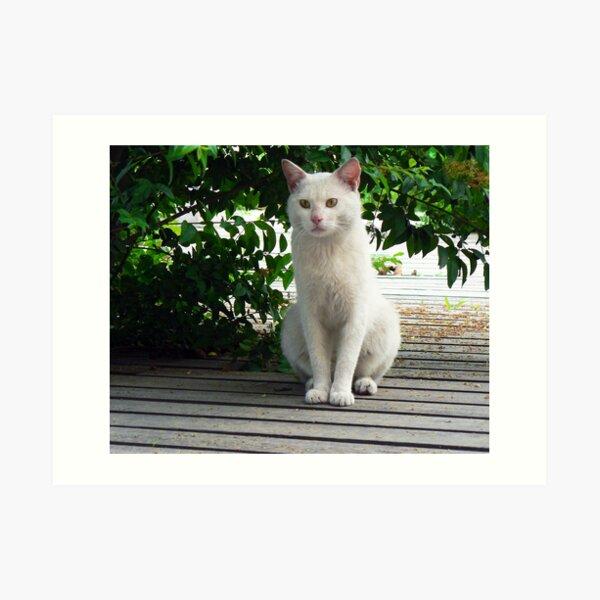 White Shanghai Cat Art Print
