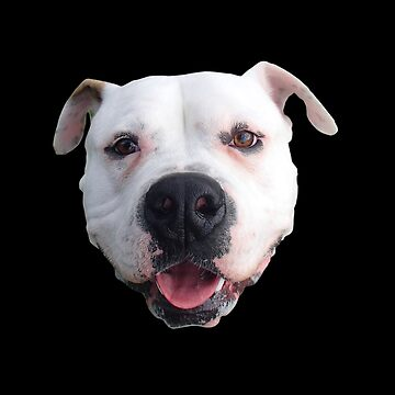 Adopted - American Bulldog by BlokeyAarsevark