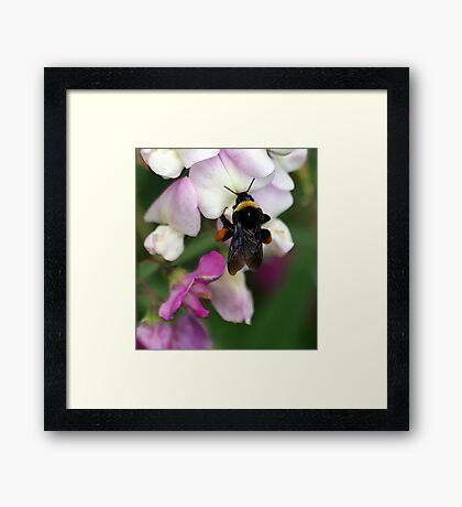 Bee Diner Framed Print