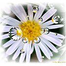 Daisy's Daisy's Everywhere by Pat Moore