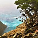 Old Cypress by the Sea by Barbara  Brown