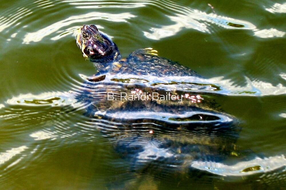 Snapping turtle closeup by ♥⊱ B. Randi Bailey