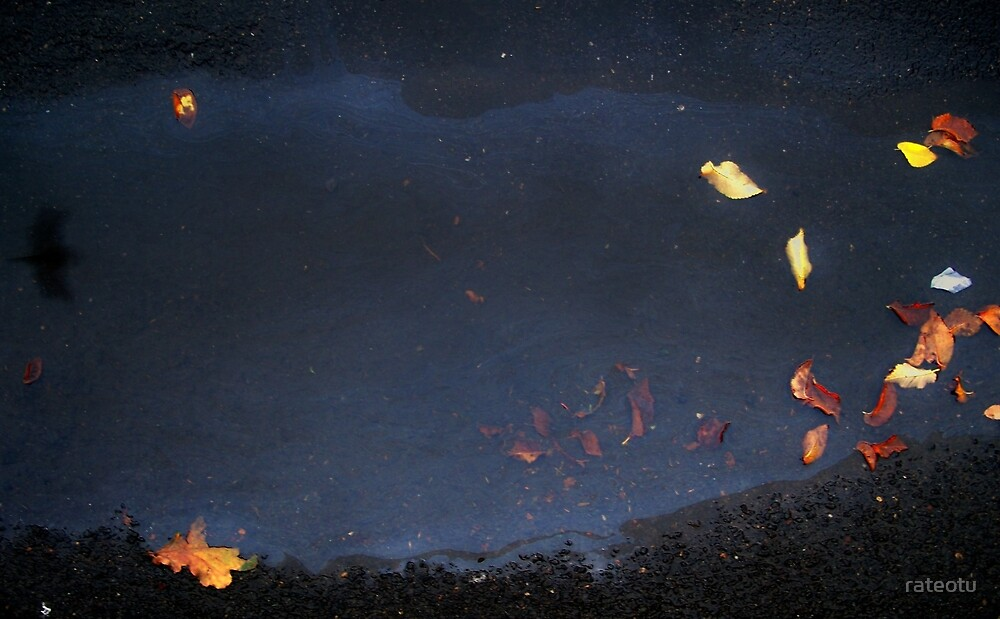 night bird by rateotu