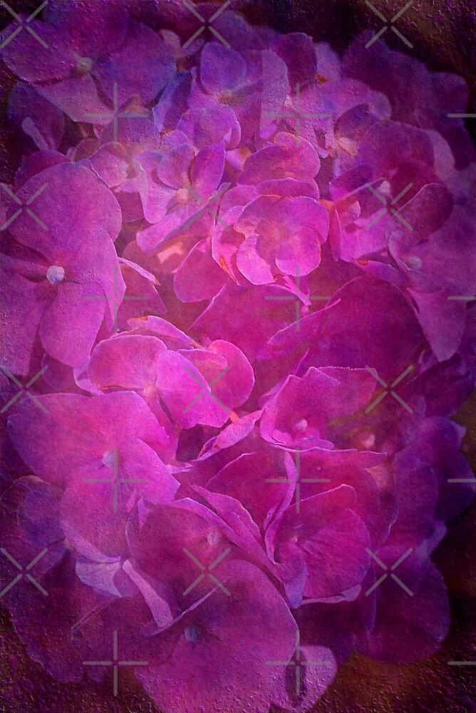 Hydrangea Textured in Pink Light by Joy Watson