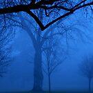 Cold winter fog by Cricket Jones
