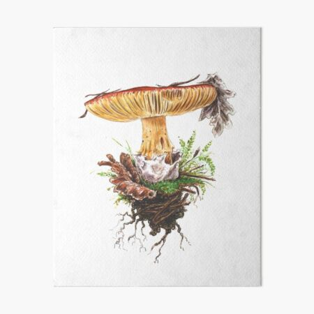 Kaiserling / Amanita caesare Galeriedruck