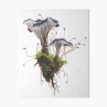 Faerberia carbonaria / Pseudo-Leistling Galeriedruck