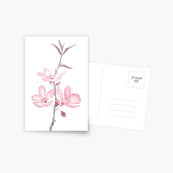 pink cherry blossom macro 2018 Postcard