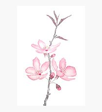 pink cherry blossom macro 2018 Photographic Print
