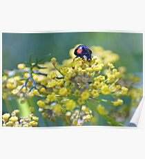 Sourcing the sweetest fennel Poster