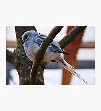 Diamond Dove Photographic Print