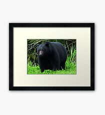 Black Bear, Framed Print