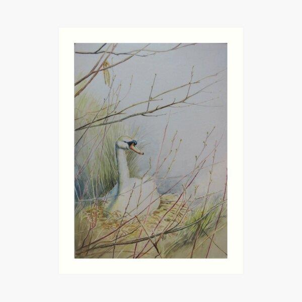 Swan on the nest Art Print
