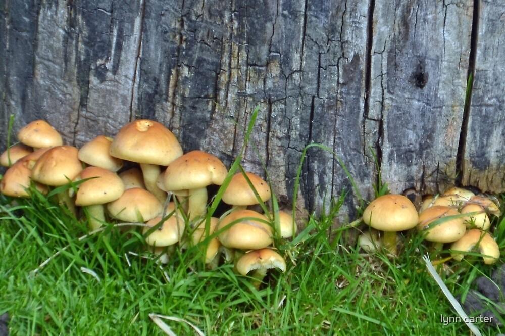 One Big Happy Family Of Fungi by lynn carter
