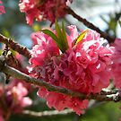 Springtime Bloom by ctheworld