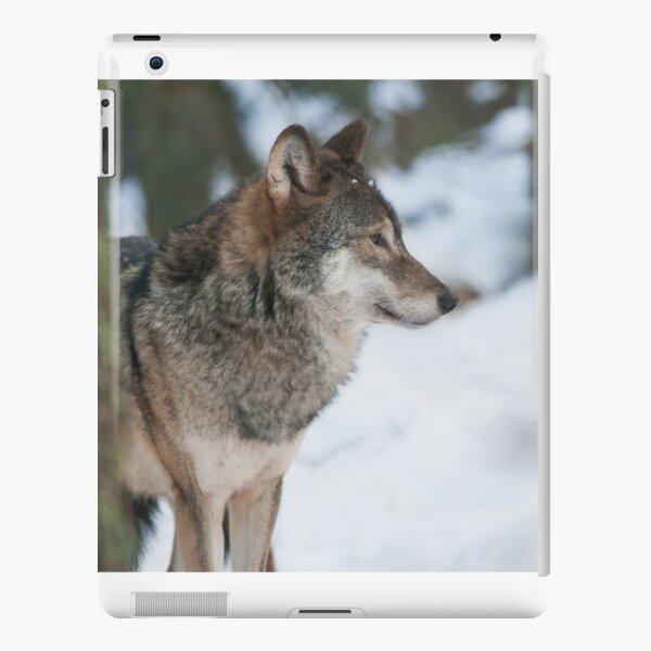 Eurasian grey wolf side portrait  iPad Snap Case