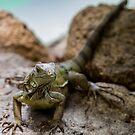 Reptilia 3 by John Velocci