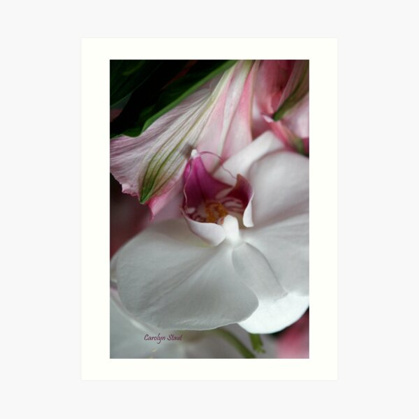 Anniversary Orchid Art Print