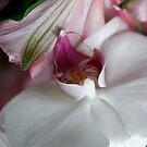 Anniversary Orchid by Carolyn Staut