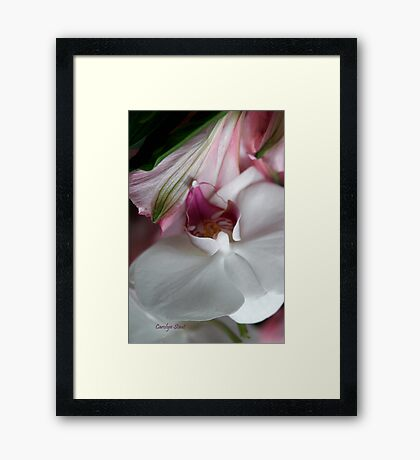 Anniversary Orchid Framed Print