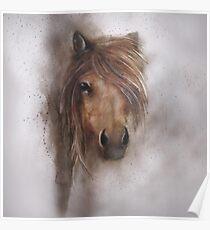 Horse equine animals,wildlife,wildlife art,nature Poster