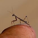 Praying Mantis attack by Normf