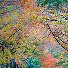 Autumn Palette by Harry Oldmeadow