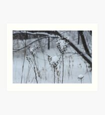 Just a sprinkle of snow Art Print