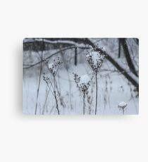 Just a sprinkle of snow Canvas Print
