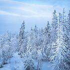 Winter forest by Svetlana Korneliuk