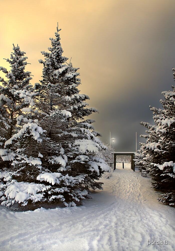 January 30 by Þórdis B.