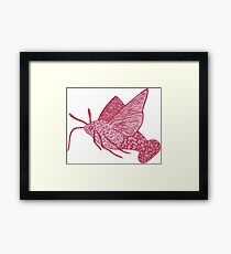 Hummingbird Hawk-moth - magenta version Framed Print
