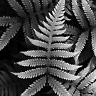 moustache fern by Hannele Luhtasela-el Showk
