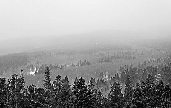 Peak to Peak Highway Snowstorm Study 2  by Robert Meyers-Lussier