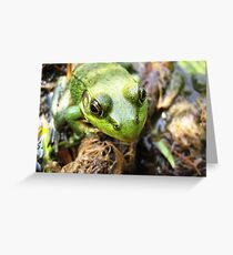 Green frog.... Greeting Card