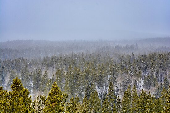 Peak to Peak Highway Snowstorm Study 1  by Robert Meyers-Lussier